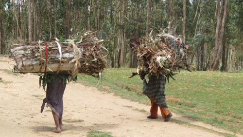 women fuelwood carriers