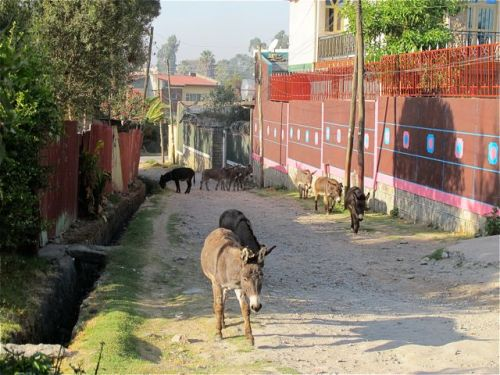 donkeys in the lane