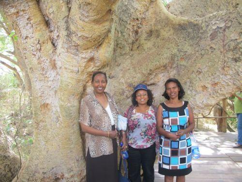 under giant tree