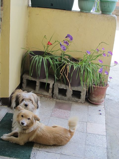 Titi and Pico enjoy freesias!