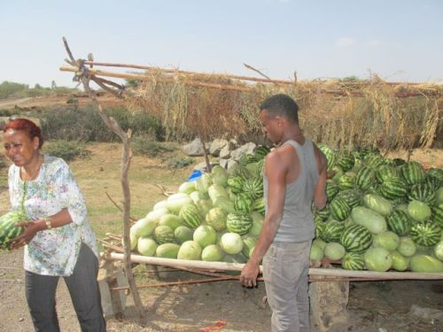 buying watermelons