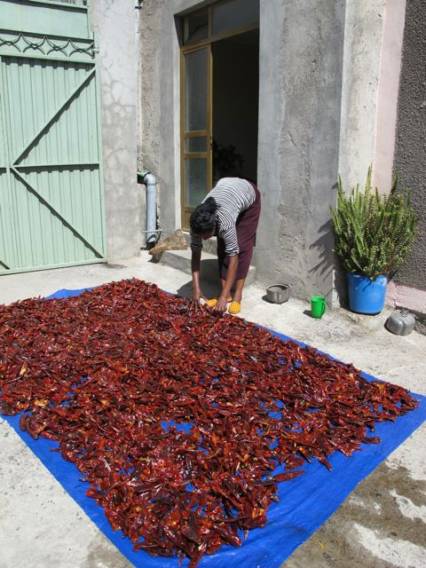 drying chilis