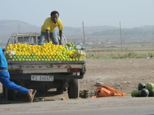oranges and mangoes on truck