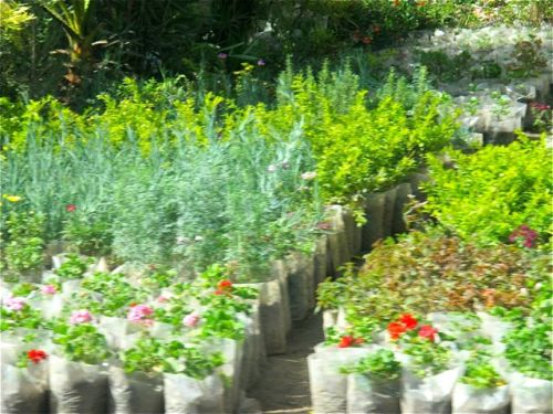 plants for sale at debre zeit
