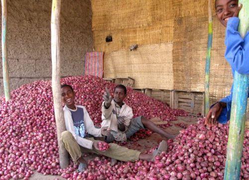3 onion boys
