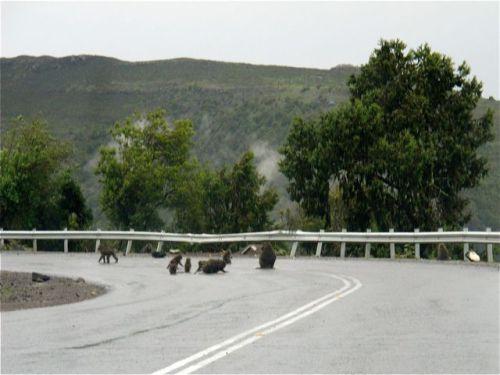 baboons ahead!