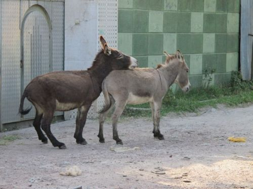 donkeys in lane