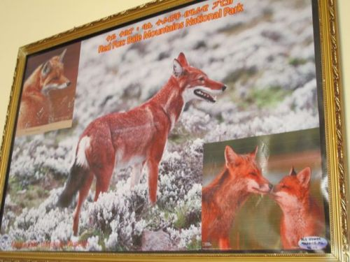 red fox painting in President's office