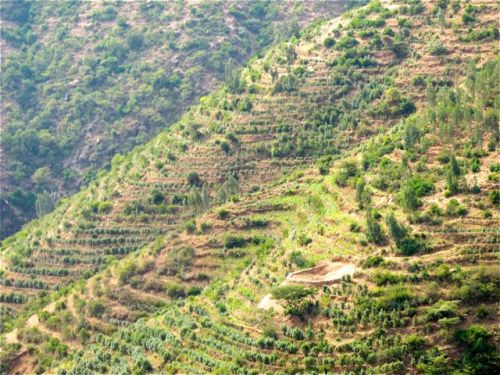 hillside terraces en rout to harar