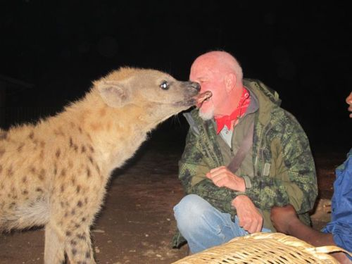 "howie ""kissing "" hyena"
