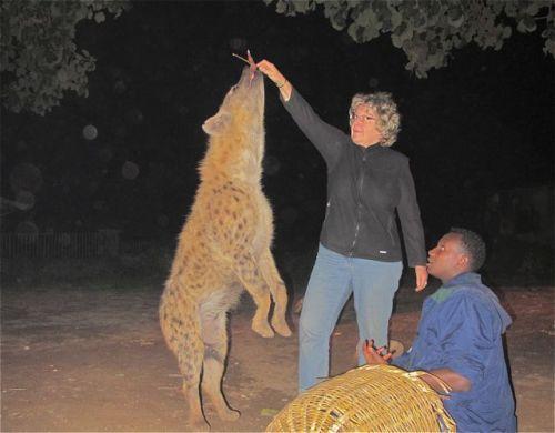 me feeding hyena