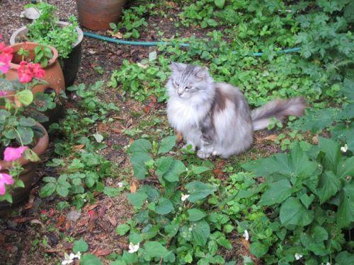 misty cat